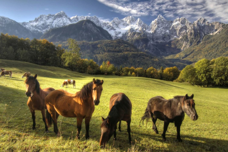 Horse riding in triglav national park