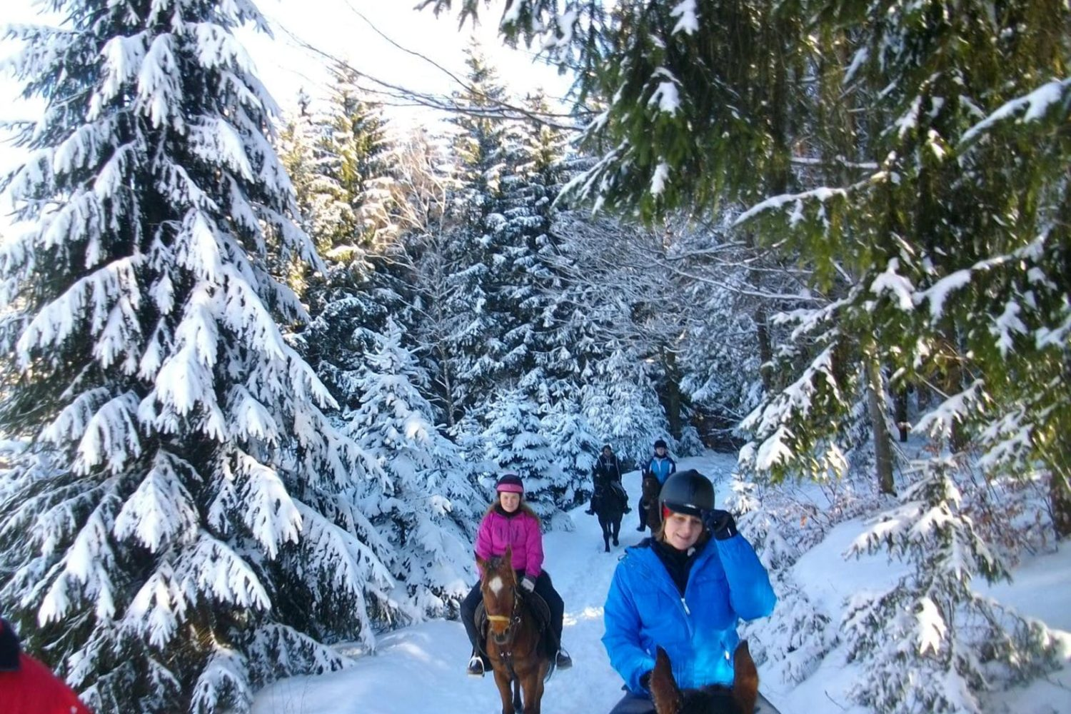 Winter horse riding in Bled