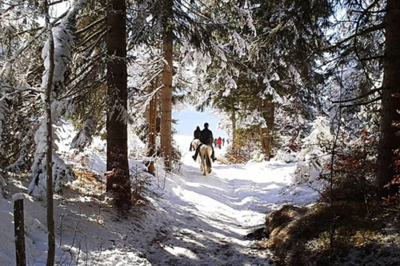 Winter horse riding in Ljubljana