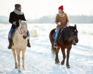 Winter horse ride in slovenia