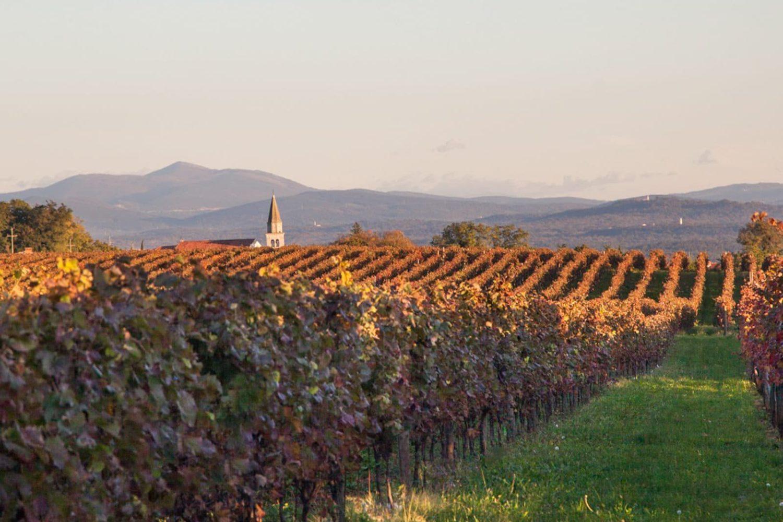 Slovenia wine taste trip