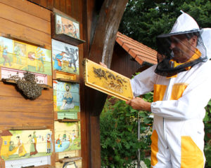 Charming Bled and Beekeeping in Radovljica
